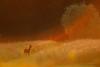 Stairway to heaven (hvhe1) Tags: sunset wild orange sun game nature animal mammal ray wildlife natuur halo doe pasture lensflare roedeer sunflare zonnestraal ree capreoluscapreolus hvhe1 hennievanheerden reegeit