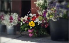 Blumen - Flowers - Flores DSC_7908-001 (maya.walti HK) Tags: pflanzen blumen spanien plazalasflores 230614 copyrightbymayawaltihk fotosquerbeet querbeet2014 murciastadt frpflanzenfreunde