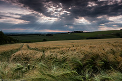 Light Rays (paulraybouldphotography) Tags: sunset red summer sky orange sun sunlight plant green nature field weather yellow rural landscape outdoors gold countryside stem corn scenery bright dusk farm horizon cereal harvest seed farmland growth crop land environment organic agriculture
