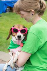 Sassy (Save-A-Pet Adoption Center) Tags: dog beagle female sassy volunteer 2014 dogdaysofsummer saveapet sandypics