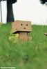 10154217_10201858450366252_5096985655172444420_n (WovenTam) Tags: toys danbo danboard minidanboard