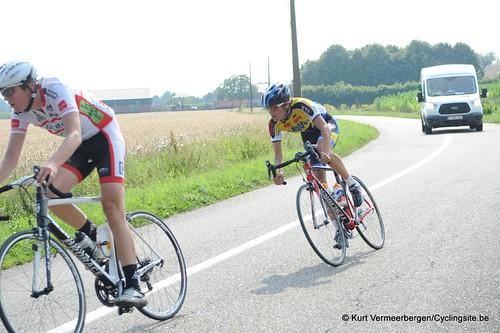 Geel Oosterlo  (203)