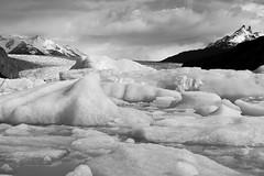 Patagonia (Micheline Fontana) Tags: chile bw pb torresdelpaine iceberg glaciar glaciargrey patagonia2014