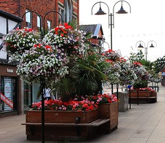 Flowers in Victoria St. Crewe. (Eddie Crutchley) Tags: flowers england europe cheshire crewe streetview