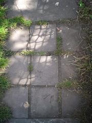 up the garden path (the incredible how (intermitten.t)) Tags: light shadow garden path cardiff gardenpath patchesoflight 24048 caedydd 20140717