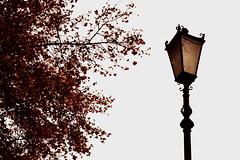 Farol (micaela.sc) Tags: tree hoja sepia arbol farol