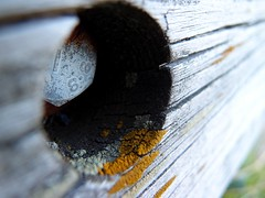 Bench (mdarowska) Tags: oslo norway bench flickr bjerke visitnorway visitoslo diggeroslo