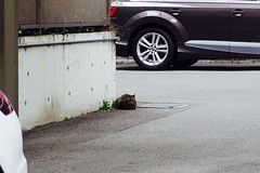 Today's Cat@2017-03-14 (masatsu) Tags: cat thebiggestgroupwithonlycats catspotting pentax mx1 osaka