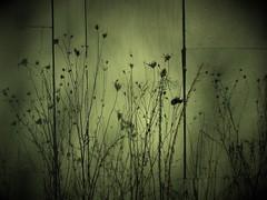 Door to Nowhere (babymowgli16) Tags: vignette weeds plant green door abandoned