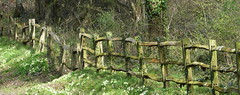 Fence (ART NAHPRO) Tags: mothers day spring march 2017 sussex etchingham fontridge lane