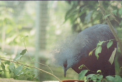 F1000011_lr (chi.ilpleut) Tags: singapore 2017 myday march outdoor outing film ilovefilms shootfilm kodakfilm expiredfilm jurongbirdpark birds seeing greenery ilovegreen analogue analog track grain