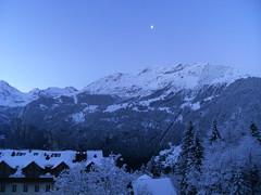 ... ... ... ... ...Guten MOrgen... (project:2501) Tags: wengen jungfrauregion suisse switzerland snow ski travel hotel hotelbelvédère hotelroom artnouveau 1912 view aroomwithaview balcony theviewfromhere morning morninglight bluelight blue bluebleu bleu sunrise inthemountains mountains mountain rock pinetrees alpinefauna stellifluh2232m mürren1634m jungfrau4158m breithorn3782m tschingelhorn3557m gspaltenhorn3437m