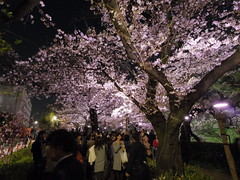 IMGP5667 (digitalbear) Tags: pentax q7 08widezoom 17528mm f374 chidorigafuchi chiyodaku tokyo japan yozakura sakura hanami cherry blossom blooming yurakucho tonkatsu shige tokyointernationalforum kokusai forum