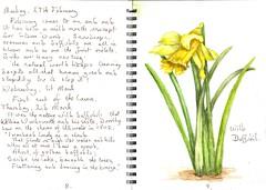 Daffodils (Hornbeam Arts) Tags: flowers wordsworth poem sketch watercolour