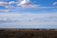 American Prairie Reserve 3