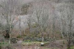 2JAC3336_exmoor_170313 (_husky_) Tags: devon exmoor exmoornationalpark fuji1655 fujixt1 nationaltrust somerset watersmeet