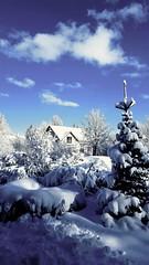Snow and more snow (skolavellir12) Tags: iceland selfoss snow trees winter
