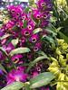 2017-03-18_0550i_waldor (lblanchard) Tags: 2017flowershow displaygarden waldor