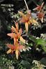 2017-03-18_0316n_waldor (lblanchard) Tags: 2017flowershow displaygarden waldor