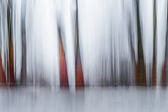 carnival (Valerie Guseva) Tags: trees abstract light lights long exposure surreal icm impression russia smooth smudge hypnotic nature line illusion blur focus black minimalism grey lightpainting white shine deepness ngs colour dream dreamy calm blurred memory past painterly twop contemporary contrast unconscious movement drawing graphic shadow modern life last force experimental flow expression strange dark winter shelter sleep night evening far tree fire mysterious magic lost tale woods heavy grain haze death strive forest forward red spring ice
