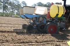 Peanut Planting 10 (UGA College of Ag & Environmental Sciences - OCCS) Tags: uga tifton campus peanuts planting