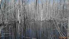 Parc du Lac-Beauchamp, Gatineau - Canada - 2543 (rivai56) Tags: gatineau québec canada sonyphotographing parc du lacbeauchamp