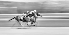 Homestretch Battle: The Fight for First (JDS Fine Art Photography) Tags: monochrome bw blackwhite horses horseracing racing competition challenge speed panning racetrack