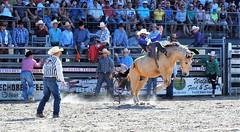 P3110148 (David W. Burrows) Tags: cowboys cowgirls horses cattle bullriding saddlebronc cowboy boots ranch florida ranching children girls boys hats clown bullfighters bullfighting