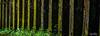 Cellule des Amannites (R.B.Pixx) Tags: guyane bagne des amannites