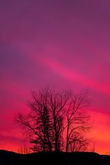 Early Morning Sunrise (Nicholas Erwin) Tags: sunrise sky trees silhouette nature waterbury stowe vermont vt unitedstatesofamerica usa landscape nikon d610 70200f4vr fav10 fav25