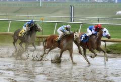 "2017-03-31 (39) r4 Jevian Toledo on #3 The Pulse (JLeeFleenor) Tags: photos photography md maryland marylandracing marylandhorseracing laurelpark horseracing jockey جُوكِي ""赛马骑师"" jinete ""競馬騎手"" dżokej jocheu คนขี่ม้าแข่ง jóquei žokej kilparatsastaja rennreiter fantino ""경마 기수"" жокей jokey người horses thoroughbreds equine equestrian cheval cavalo cavallo cavall caballo pferd paard perd hevonen hest hestur cal kon konj beygir capall ceffyl cuddy yarraman faras alogo soos kuda uma pfeerd koin حصان кон 马 häst άλογο סוס घोड़ा 馬 koń лошадь"