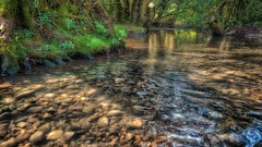 Softly falls the light on the river (jeannie debs) Tags: river bed bank pebbles flora fauna trees light reflections outdoor flowers yellow ferns grasses lesser celandine roots easter love