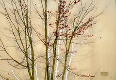 trees :: earliest spring (dotintime) Tags: tree branch limb shadow white green yellow grace red orange spot dot cluster clump dotintime meganlane