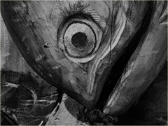 an eye on the fly (marneejill) Tags: carved wooden salmon closeup face fly blackandwhite