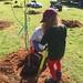Highland_Renaissance_Tree_Planting_Event_2017 (46)