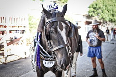 63+476: 2017 Sydney Royal Easter Show  (36/42) (geemuses) Tags: 2017sydneyroyaleastershow horse horses animals pets nature agriculturalshow riders riding stalls horsestalls sheds carthorse