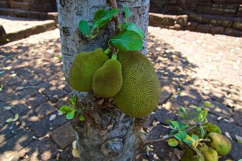 Jackfruit inside a Khmer temple ruin in Prasat Muang Singh in Kanchanaburi, Thailand