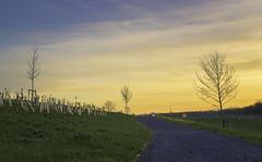 Imagination (Course Tasks) (Coisroux) Tags: light path walkway distance treeline sunset sunshine horizon golden luminance d5500 nikond hamptonvale colorful shine trees saplings fences curves gate