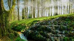 Ruisseau (ΨᗩSᗰIᘉᗴ HᗴᘉS +21 000 000 thx) Tags: ruisseau river eau water nature landscape green fog annevoie jardinsdannevoie cascade waterfall hensyasmine leica leicaq 7dwf thebestofmimamorsgroups