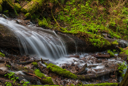 Water Flows over a Log