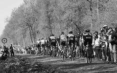 Paris Roubaix (Dusty J) Tags: paris france europe nikon d750 nikkor vacation art light dustin gaffk gaffke dustingaffke dustyj bike bicycle bikes street velo bici