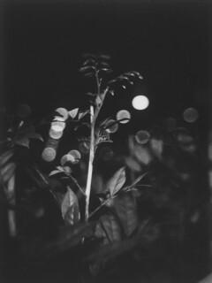 plant and night lights