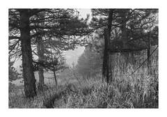 (Luminous☆West) Tags: sigma sd sdq sdqh quattro h foveon 35mm 14 dg art landscape sdqh0512 monochrome luminouswest bw black white blackwhite sdquattroh