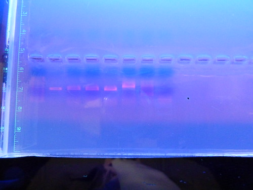 "Jóvenes de la ESO estudian la biodiversidad microbiana • <a style=""font-size:0.8em;"" href=""http://www.flickr.com/photos/61278771@N07/13981762932/"" target=""_blank"">View on Flickr</a>"