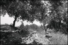 Santa Cruz (westkauai) Tags: california blackandwhite bw santacruz trix nikonf 28mmlens nikkorh28cmf35