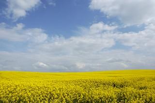 Yellow field time around here.