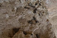 Egagrópilas (esta_ahi) Tags: españa joaquim archaeology architecture spain arquitectura aves villa angelina tarragona romana termas termes arqueología digestión tarragonès archäologie arqueológico rapaces arqueològic испания constantí egagrópila centcelles mausoleudecentcelles villaromanadecentcelles ri550000047