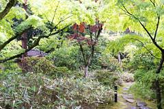 大徳寺 高桐院 (GenJapan1986) Tags: japan temple kyoto 日本 2014 daitokuji 大徳寺 京都市 京都府 kotoin 北区 高桐院 nikond600