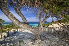 Plage de Saleccia (Njones03) Tags: mer france corse plage mediterranee greatphotographers saleccia flickrunitedaward
