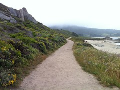 On the pathway/Ribera Road (LOLO Italiana) Tags: ca nature fog landscape pacificocean carmel wildflowers centralcoast pathways carmelriverbeach carmelmeadows riberapathway
